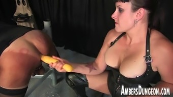 Girlfriend Lux rectum dilling, strap-on and milking of male pig